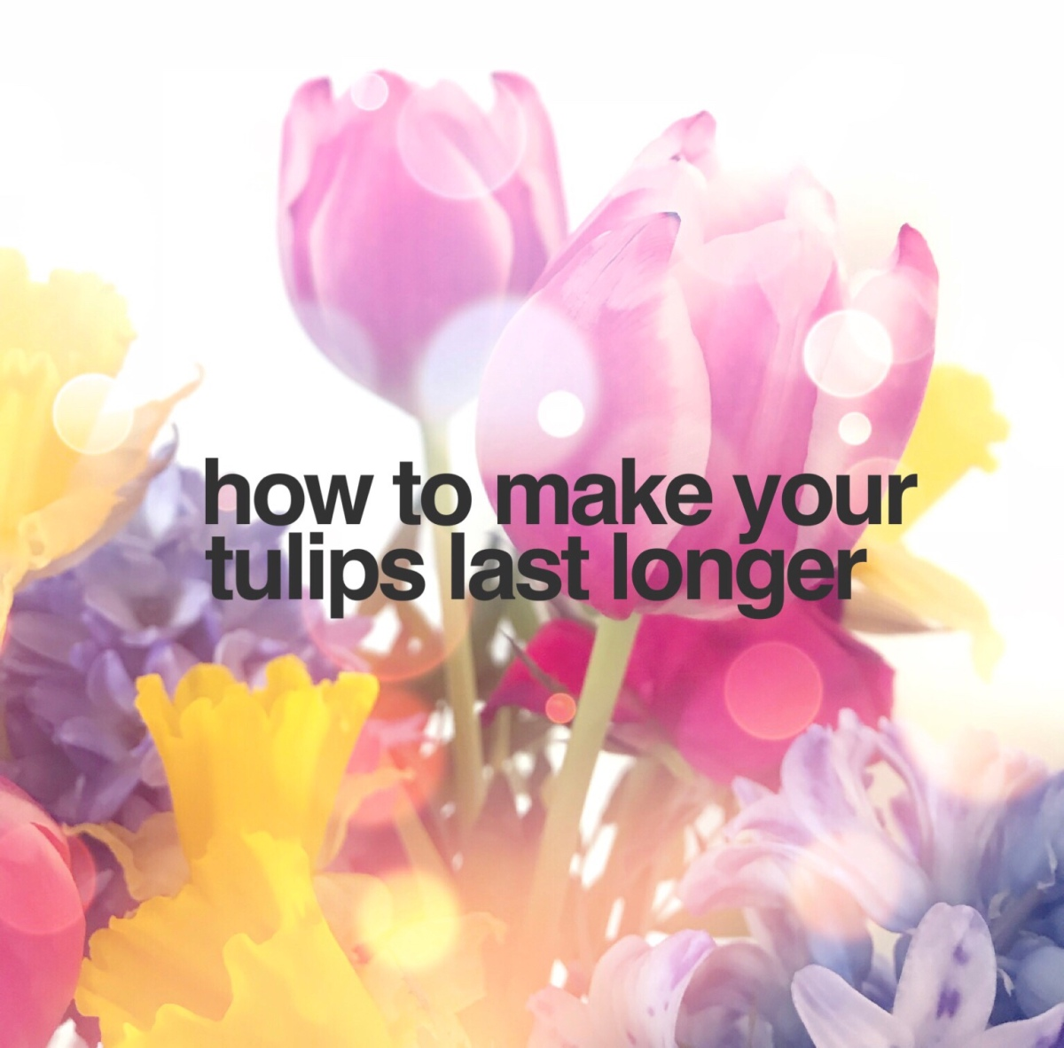 How To Make Your Tulips Last Longer